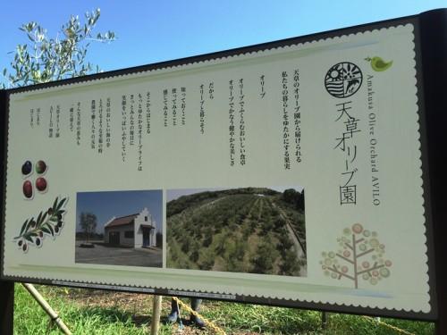 天草オリーブ園AVILO (19)