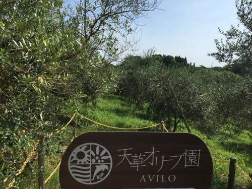 天草オリーブ園AVILO (30)