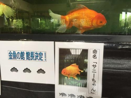 金魚と鯉の郷 (7)
