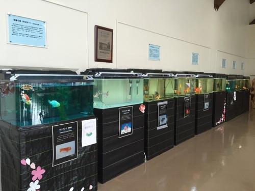 金魚と鯉の郷 (8)